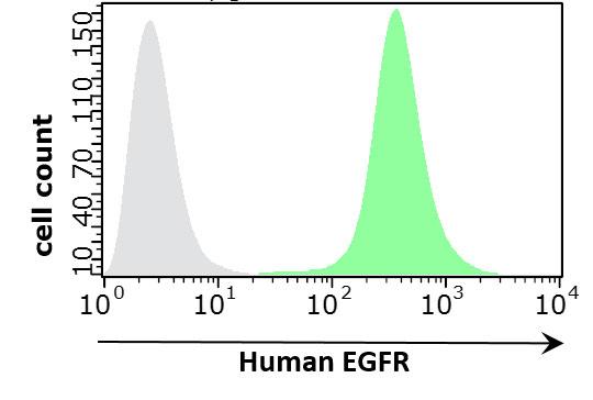 epidermal growth factor receptor (EGFR)
