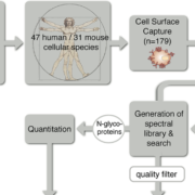 A Mass Spectrometric-Derived Cell Surface Protein Atlas