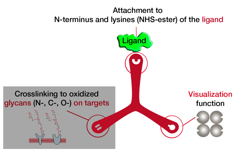 Dualsystems-Biotech-Switzerland-Flow-TriCEPS-Pretest-Vizualization-function