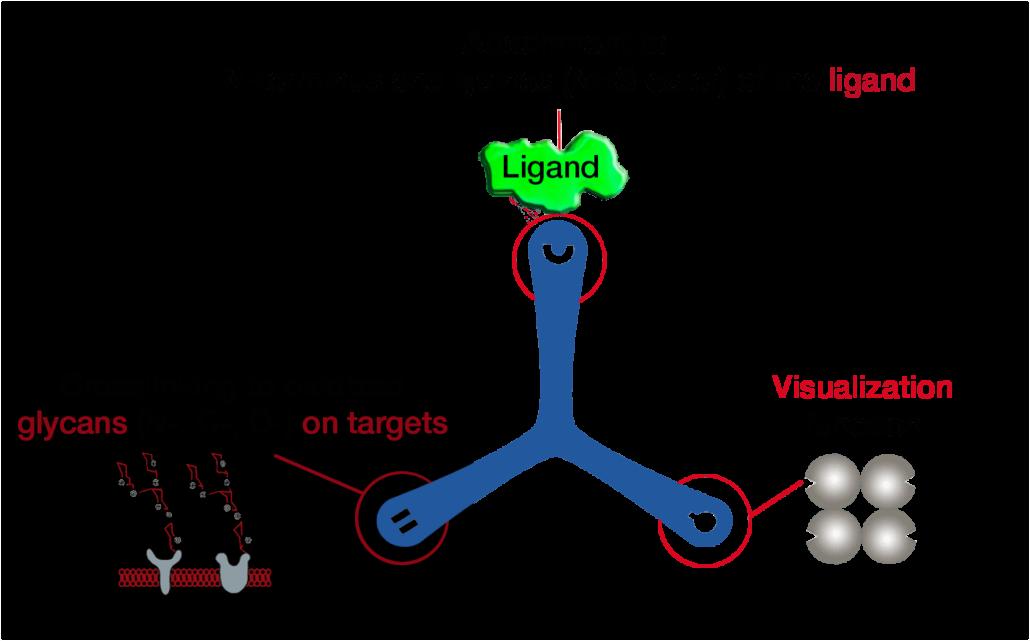 Dualsystems-Biotech-Switzerland-LRC-TriCEPS