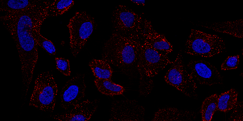 Dualsystems-Biotech-Switzerland-TAMRA